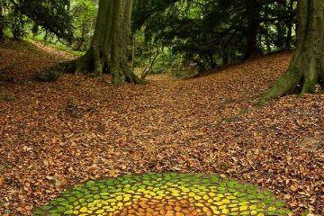 L'artista organizza gli oggetti naturali in composizioni  e disegni effimeri