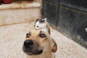 Da Aleppo una storia commovente tra un gattino e un cane
