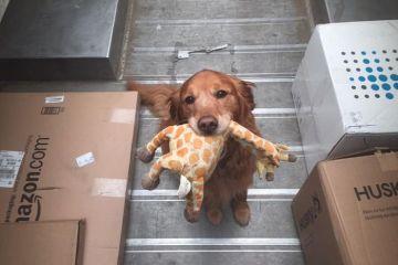 """Operazione """"UPS dog"""" il cane come miglior amico del postino"""