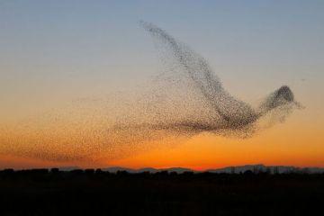 I disegni suggestivi degli stormi di uccelli nelle foto di Daniel Biber