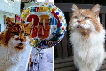 Gatti longevi: Si chiama Rubble ed è il gatto più anziano della Gran Bretagna
