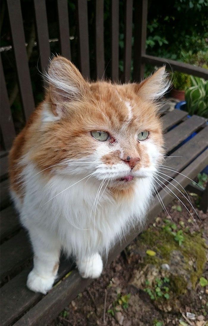 Gatti longevi