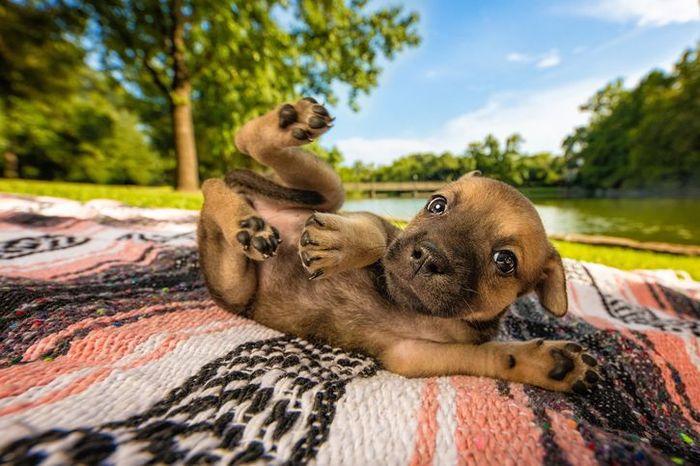 "Le bellissime foto di cani dell'ultimo concorso ""Dog Photographer of the Year"""