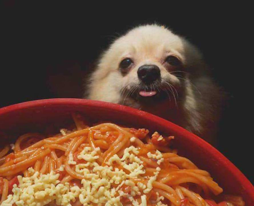 """Quando si dice """"avere una fame cane!"""""""