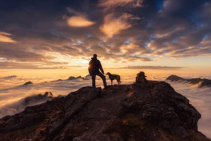 "Le bellissime foto di cani dell'ultimo concorso ""Dog Photographer of the Year"""