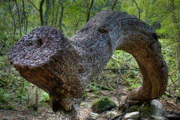 Il mistero degli alberi ricoperti di monete