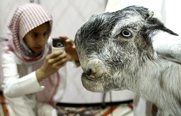 La capra di Damasco la più brutta capra del mondo