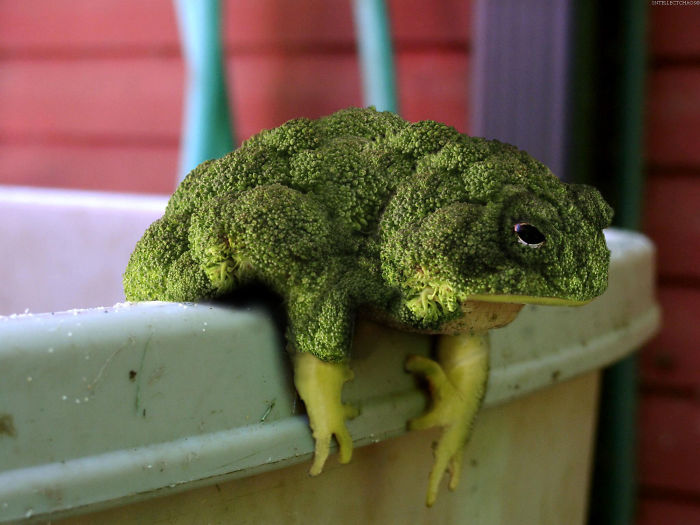 Artisti del fotomontaggio con Photoshop in gara per fondere piante con animali