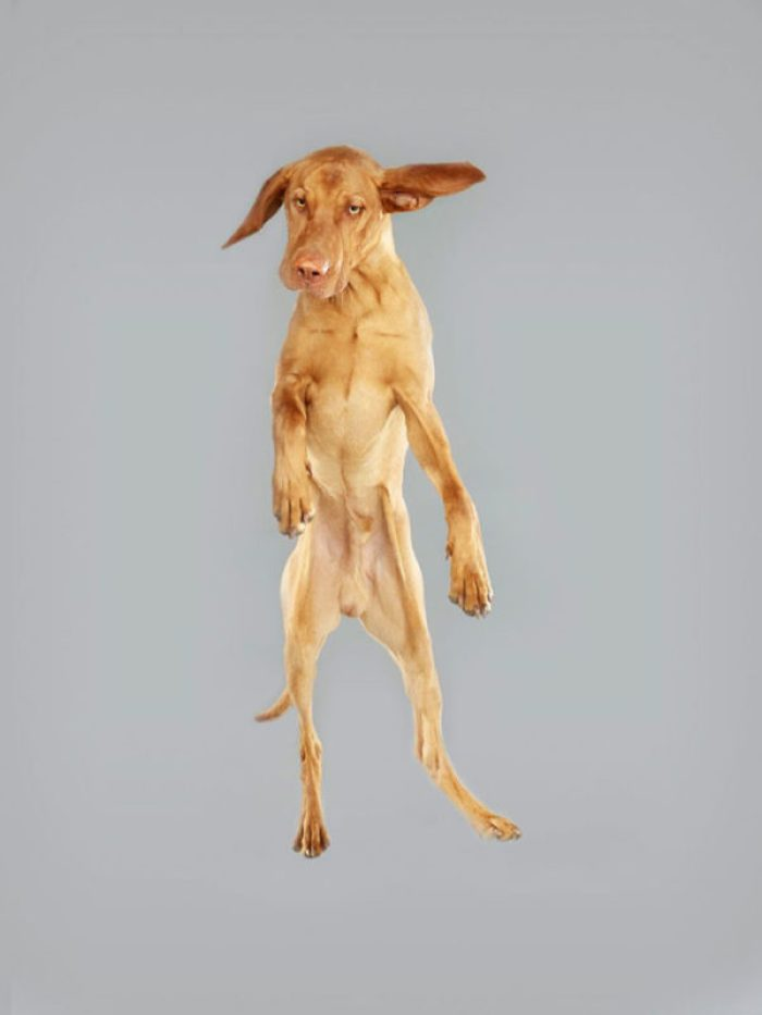 I cani volanti di Julia Christe