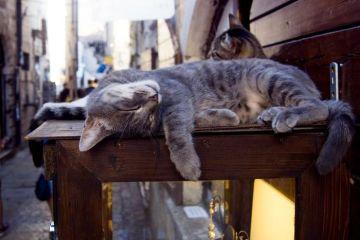 In Motenegro la città di Kotor è considerata la città dei gatti