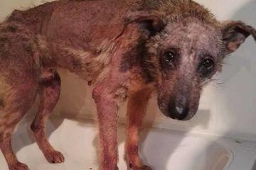 La stupefacente ripresa di un cucciolo di cane destinato a morire