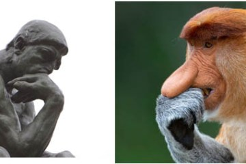 """Le scimmie come """"Le Penseur"""" di Rodin nelle foto di Mogens Trolle"""