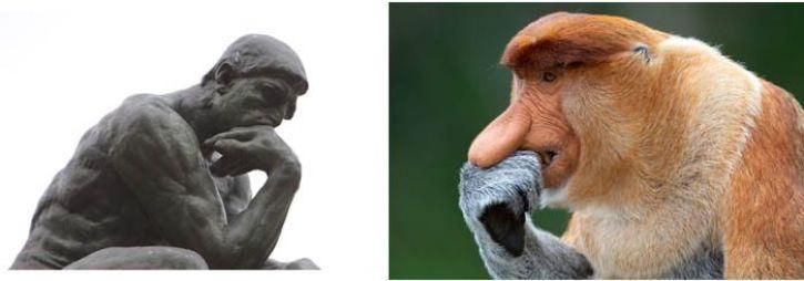 """Le scimmie come """"Le Penseur"""" di Rodin"""