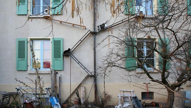 Le scale per gatti di Berna