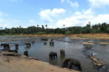 Pinnawala Elephant Shelter in Sri Lanka