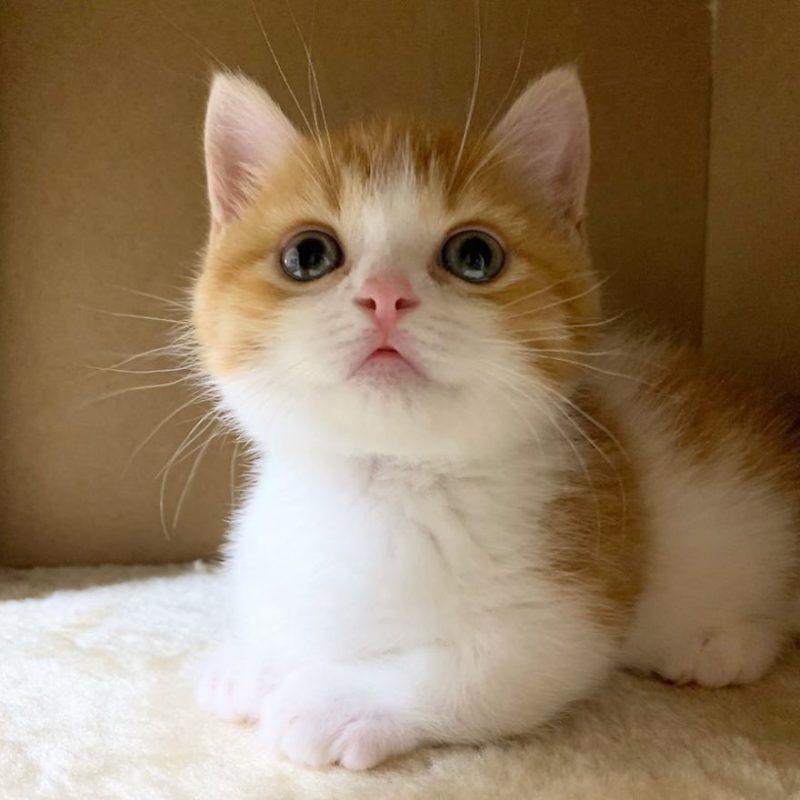 gattino di pochi mesi che dorme come un umano