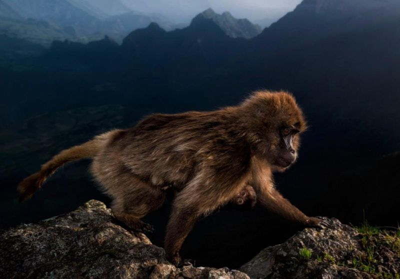 Wildlife Photographer of the Year 2019 riccardo-marchegiani