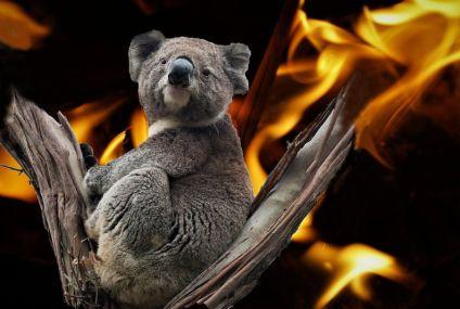 Incendi in Australia Le immagini più scioccanti