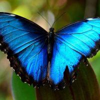 I colori della natura nelle foto di farfalle