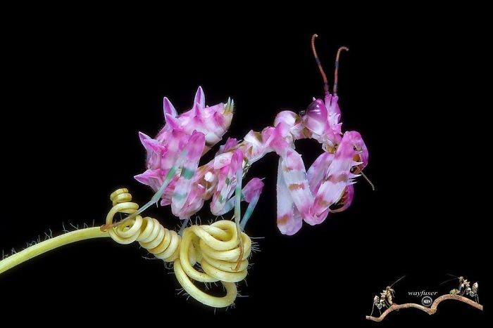 fotografie macro di insetti