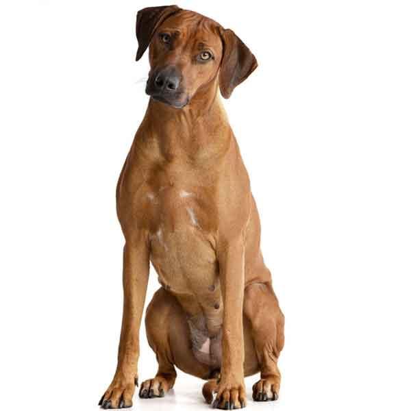 Copertina Lion Dog