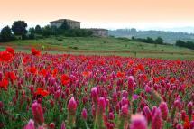 Star Italy Luxury Tour Milan Como Tuscany & Amalfi
