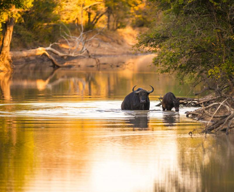 Kruger Park  Swaziland Safaris Day and Night Game Drives