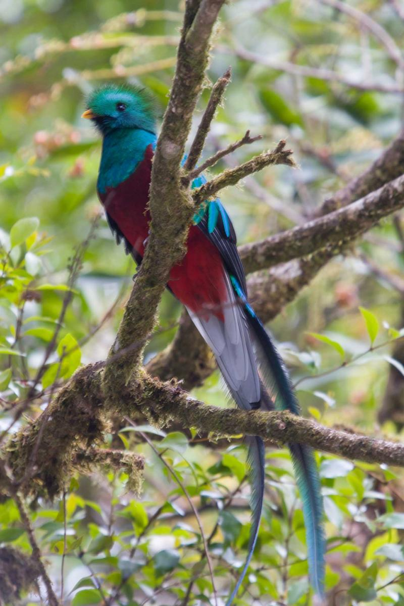 Costa Rica Vacation Package A Tropical Getaway To Quepos