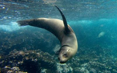 Galapagos Tour for Solo Travelers: Island Hopping & Cruise ...