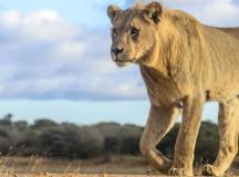 South Africa Vacation Packages: Safari, Winelands ...