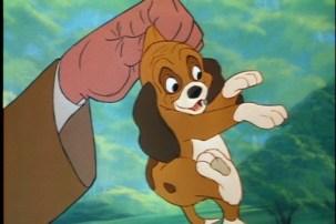 C'ets la voix du jeune Rox dans Rox et Roucky