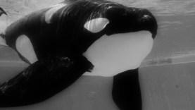 Blackfish2