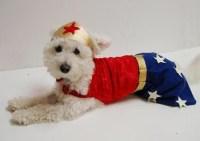 Wonder Wodog
