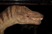 Expo autour des dinosaures8