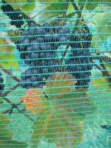 Vogelschutz- und Hagelnetz (und auch Wespennetz)