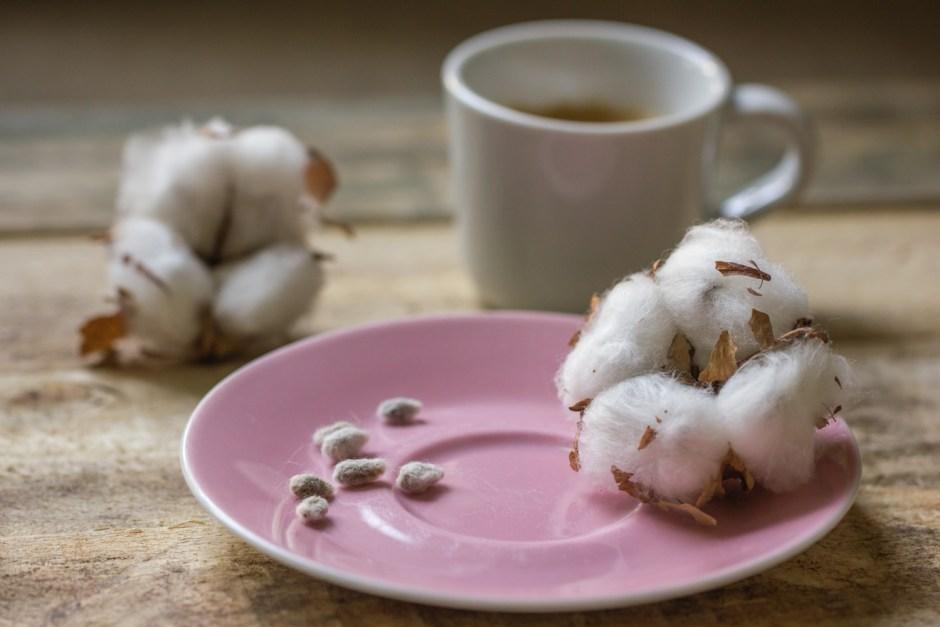 Bawełna indyjska nasiona owoce