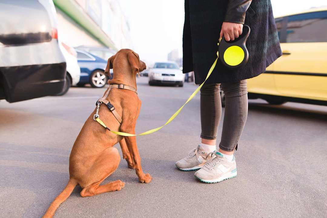 dog bites new york lawyer ziff law2 - Dog Attacks