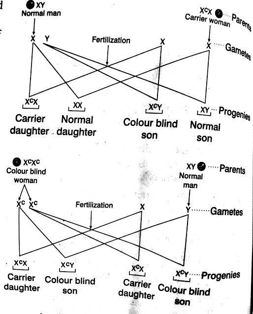 Test cross involves from Class Biology Principles of