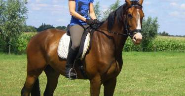 Ruiter te paard passeren bij het wielrennen