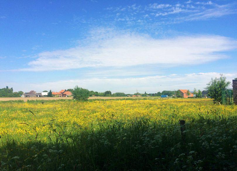 Wielrennen in de Vlaamse Ardennen