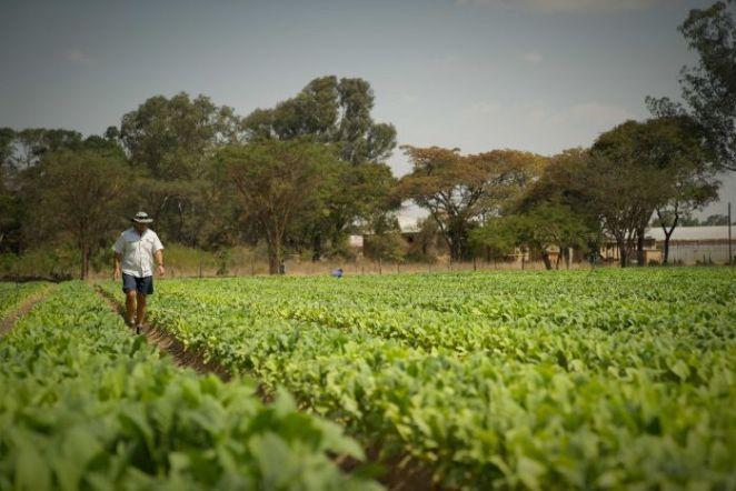 Zimbabwe's white farmers consider returning years after brutal land  seizures - Zimbabwe Situation