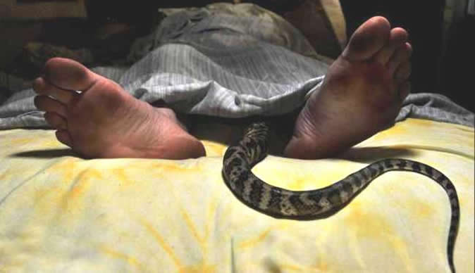 Humans having sex with snakes