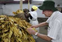 Photo of Farmers keep more dollars as tobacco  sales surpass 200 million kgs