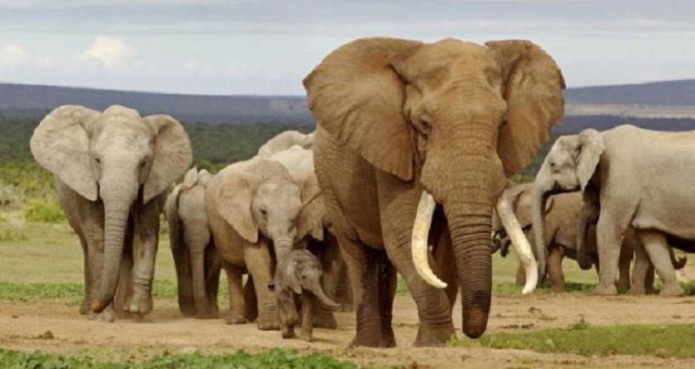 Why Zimbabwe has to sell its elephants