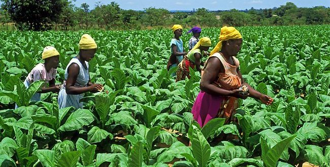 FARM WORKERS CELEBRATE G40'S FALL