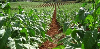 GOVT TO COMBAT MULTIPLE FARM OWNERSHIP