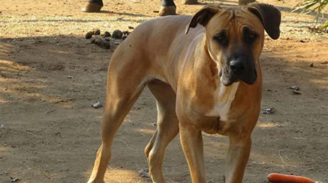 GRADE FOUR PUPIL MAULED TO DEATH BY STRAY DOG