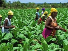 Zimbabwe farm workers earn $20 a month