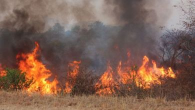 Photo of VELD FIRE DESTROYED 12OK HECTARS OF LAND