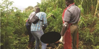 Mutare Woman's Body Found Dumped In Maize Field
